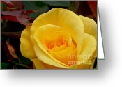 Yellow And Red Greeting Cards - Bright Yellow Rose Greeting Card by Kaye Menner