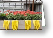 Plant Nursery Greeting Cards - Bright Yellow Rubber Gloves and Geraniums Greeting Card by Thom Gourley/Flatbread Images, LLC
