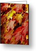 Turning Leaves Greeting Cards - Brightest Before the Fall Greeting Card by Christi Kraft