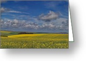 Rape Greeting Cards - Brighton Yellow Fields Greeting Card by Phil Clements