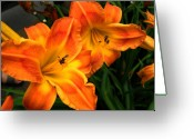 Lilies Flowers Greeting Cards - Brilliant Greeting Card by Carol Sweetwood