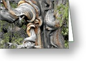 Interesting Art Greeting Cards - Bristlecone Pine - I am not part of history - history is part of me Greeting Card by Christine Till