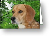 Beagle Greeting Cards - British Beauty Greeting Card by Christine Till