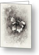 Flower Blossom Greeting Cards - Broken Blossom Greeting Card by Rachel Christine Nowicki