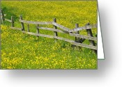 Buttercup Greeting Cards - Broken Fence And Buttercup Field Greeting Card by Photos by R A Kearton