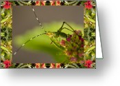 Close-up Photos Greeting Cards - Bromeliad Grasshopper Greeting Card by Bell And Todd
