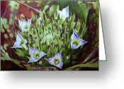 Flowers Miami Greeting Cards - Bromeliad in Bloom					 Greeting Card by Urszula Dudek