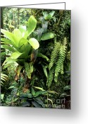 Bromeliad Greeting Cards - Bromeliad on Tree Trunk El Yunque National Forest Greeting Card by Thomas R Fletcher