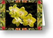 Red Orchid Blooms Greeting Cards - Bromeliad Orchids Greeting Card by Bell And Todd