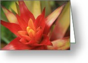 Tropical Gardens Greeting Cards - Bromeliad Greeting Card by Sharon Mau