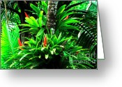 Bromeliad Greeting Cards - Bromeliads El Yunque National Forest Greeting Card by Thomas R Fletcher
