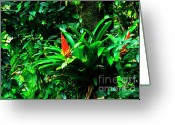 Bromeliad Greeting Cards - Bromeliads El Yunque  Greeting Card by Thomas R Fletcher