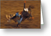 Bronc Greeting Cards - Bronc Riding 4 Greeting Card by Leland Howard