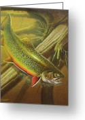 Lake Greeting Cards - Brook Trout Cover Greeting Card by JQ Licensing