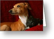 Daydream Greeting Cards - Brothers Italian Greyhounds Greeting Card by Angela Rath