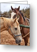 Caballo Greeting Cards - Brown and Tan Greeting Card by Kelley King