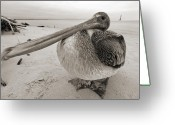 Sepia Greeting Cards - Brown Pelican Folly Beach Morris Island Lighthouse Close Up Greeting Card by Dustin K Ryan