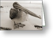 Lighthouse Greeting Cards - Brown Pelican Morris Island Sc Charleston  Greeting Card by Dustin K Ryan