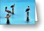 Vacation Destination Greeting Cards - Brown Pelicans in Aruba Greeting Card by Thomas R Fletcher