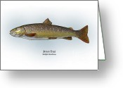 Game Drawings Greeting Cards - Brown Trout Greeting Card by Ralph Martens