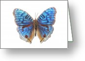 Animal Themes Greeting Cards - Brush-footed Butterfly Of Madagascar Greeting Card by MajchrzakMorel