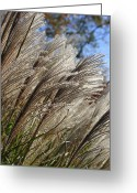 Wildflower Photograph Greeting Cards - Brushes of Autumn  Greeting Card by Neal  Eslinger