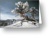Bryce Canyon Greeting Cards - Bryce Canyon Infrared Tree Greeting Card by Mike Irwin
