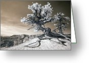 Clouds Photo Greeting Cards - Bryce Canyon Tree Sculpture Greeting Card by Mike Irwin