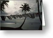 Tropical Photographs Photo Greeting Cards - Buca Bay, Laundry And Palm Trees Greeting Card by James L. Stanfield