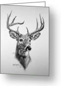 Value Greeting Cards - Buck Deer Greeting Card by Roy Kaelin