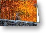 Wall Digital Art Greeting Cards - Buck Digital Painting - 01 Greeting Card by Metro DC Photography