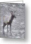 Olympic National Park Greeting Cards - Buck in Fog on Hurricane Ridge - Olympic National Forest - Olympic National Park WA Greeting Card by Christine Till