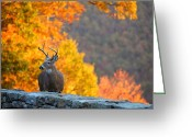 Photo Photo Greeting Cards - Buck in the Fall 04 Greeting Card by Metro DC Photography