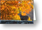 Antlers Greeting Cards - Buck in the Fall 05 Greeting Card by Metro DC Photography