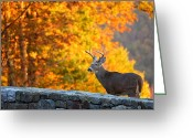 Hunter Photo Greeting Cards - Buck in the Fall 06 Greeting Card by Metro DC Photography
