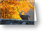 Leaves Photo Greeting Cards - Buck in the Fall 07 Greeting Card by Metro DC Photography