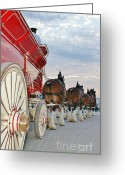 Carriage Team Greeting Cards - Bud Hitch Greeting Card by Lynda Dawson-Youngclaus
