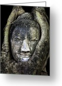 Pray Digital Art Greeting Cards - Buddha Head in Banyan Tree Greeting Card by Adrian Evans