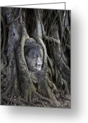 Thai Greeting Cards - Buddha Head in Tree Greeting Card by Adrian Evans