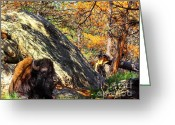 Buffalo Greeting Cards - Buffalo In Camo Greeting Card by Robert Frederick
