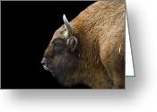 James Barnes Greeting Cards - Buffalo Greeting Card by James Barnes