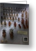 Beetles Greeting Cards - Bug Collector - So whats bugging you Greeting Card by Mike Savad
