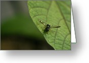 Suspicion Greeting Cards - Bugeyed Fly Greeting Card by Douglas Barnett