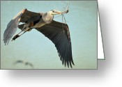 Blue Heron Photo Greeting Cards - Building Supplies Greeting Card by Fraida Gutovich