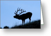 Horns Greeting Cards - Bull Elk Silhouette Greeting Card by Larry Ricker