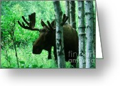 Ronnie Glover Greeting Cards - Bull Moose  Greeting Card by Ronnie Glover