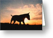 Sunset Greeting Cards - Bull Terrier at Sunset Greeting Card by Michael Tompsett