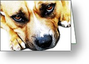 Canine Greeting Cards - Bull Terrier Eyes Greeting Card by Michael Tompsett