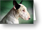 Bull Terrier Greeting Cards - Bull Terrier on Green Greeting Card by Michael Tompsett