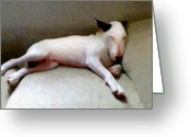 Bull Greeting Cards - Bull Terrier Sleeping Greeting Card by Michael Tompsett